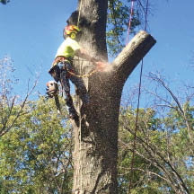 Removal of dead trees by Liscombe