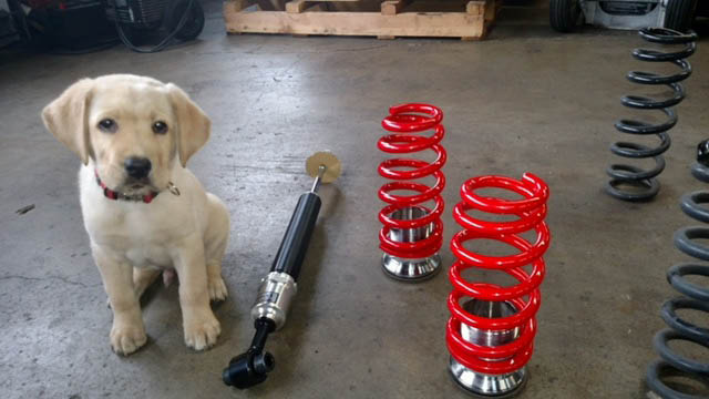 Puppy sitting inside Louis' Automotive Services in Federal Way, WA - general auto repair - Federal Way auto shop