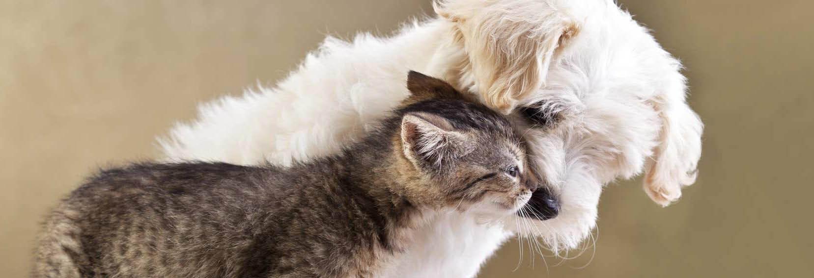 cat adoption shelters, local pet adoption centers, adopting animals from shelters  Phoenix, AZ
