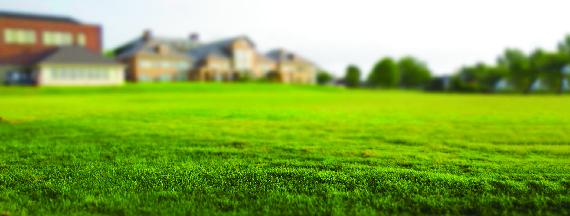 healthy, green grass