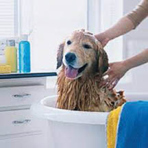 photo of dog getting bath at Maple Lane Kennels Inc in Ortonville, MI