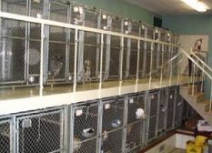 photo of kennels at Maple Lane Kennels Inc in Ortonville, MI