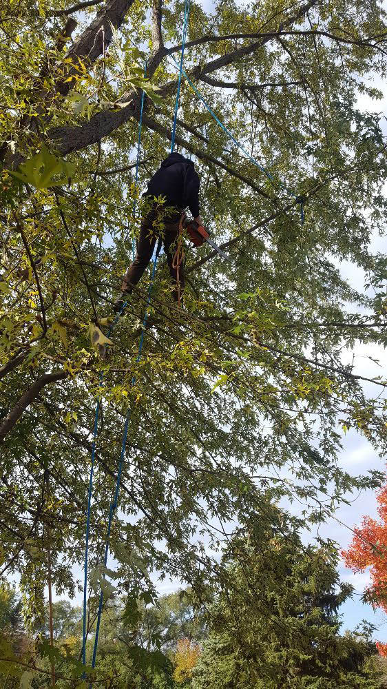 Tree Services for Residential and Commercial properties