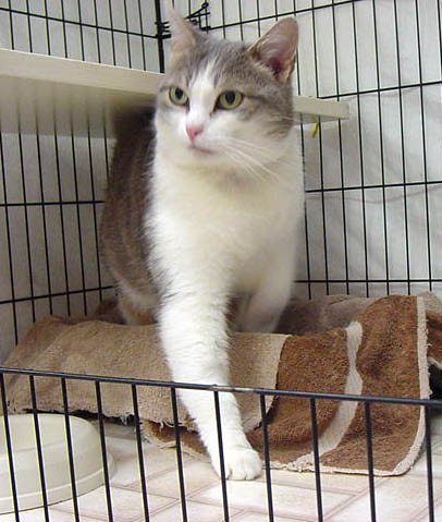 Martha Lake Veterinary Clinic in Lynnwood, Washington offers cat boarding