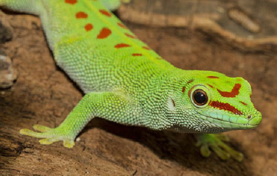 Reptiles from Martin Henry's Pet Store in Lakewood, WA - lizards from Martin Henry's Pet Store in Lakewood, WA - specializing in reptiles - reptile supplies near me - Lakewood pet stores near me - pet store coupons near me