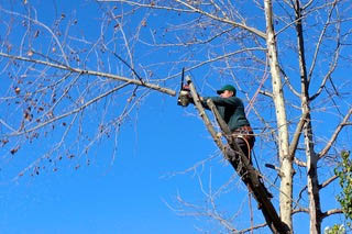 Tree Trimming by Mastership Tree and Landscaping in Dover, NJ