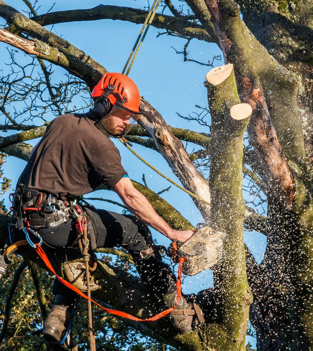 Mathias tree removal services