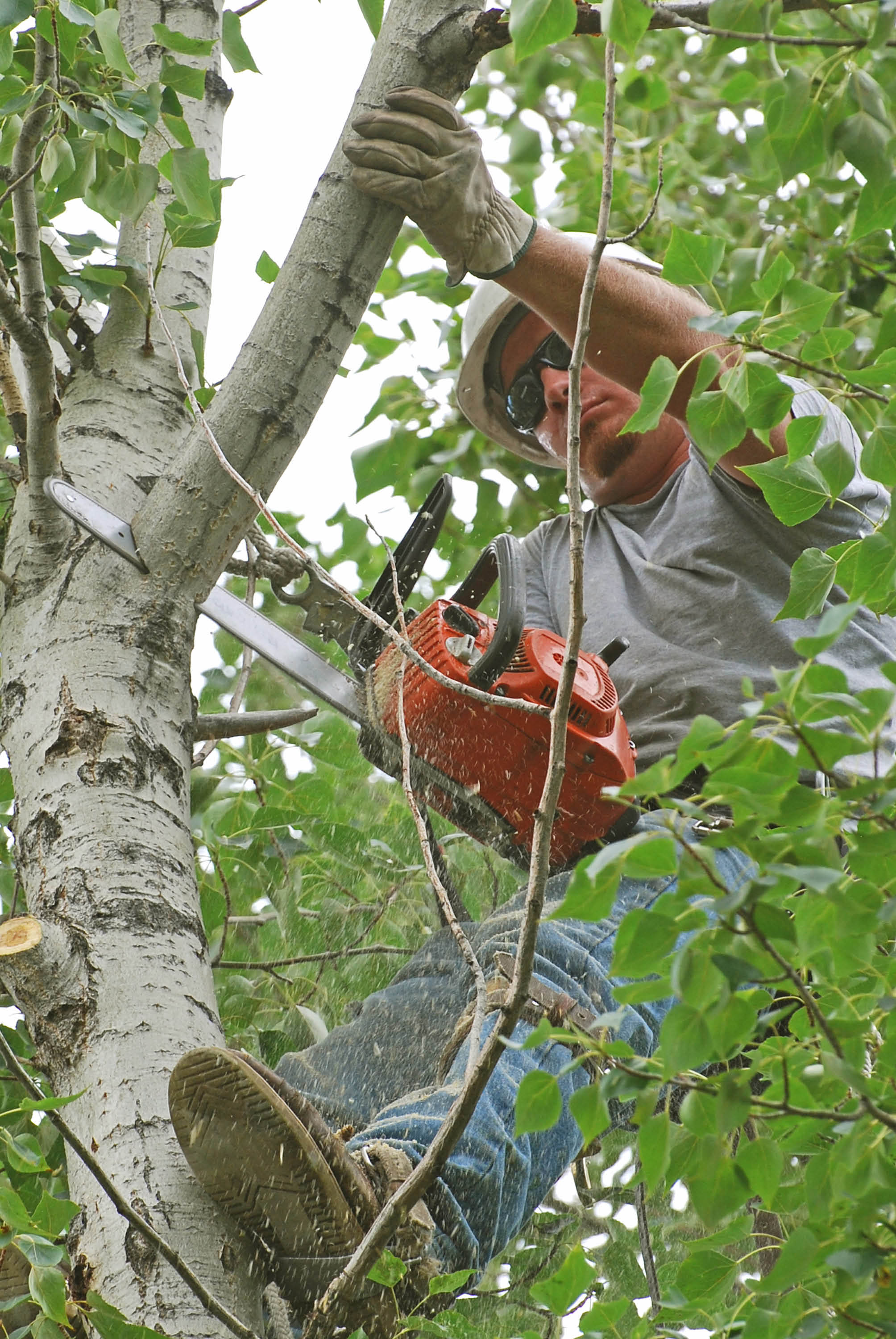 Mathias removes obstructive and dangerous tree limbs