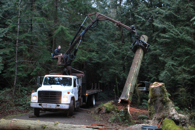 Tree removal from Matt's Tree Service - clearing trees - tree clearing - Issaquah, WA