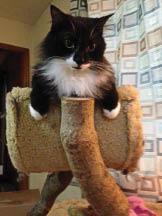 Emergency feline care center  near West Ashley
