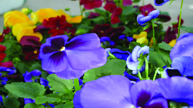 Wide selection of beautiful plants, locally grown products and expert advice!