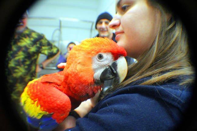 San-Antonio-Aquarium-Macaw-Parrot