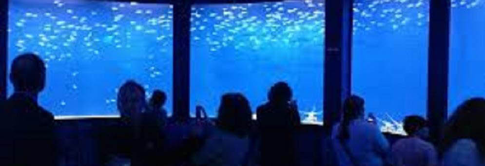 photo of people at Sea Life Aquarium Michigan in Auburn Hills, MI