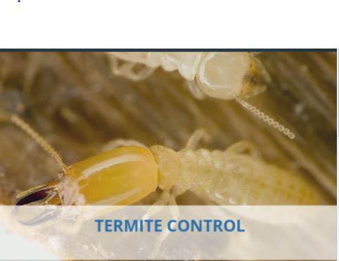 Inside termite, outside termite,