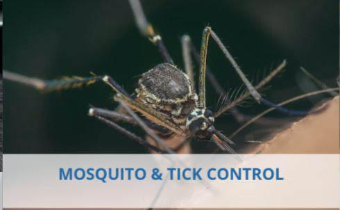 Dog ticks, mosquito, standing water