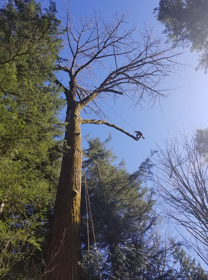 Pink Chainsaw - P.I.N.K. Chainsaw Tree Service - expert tree care and tree removal - tree service in Snohomish County
