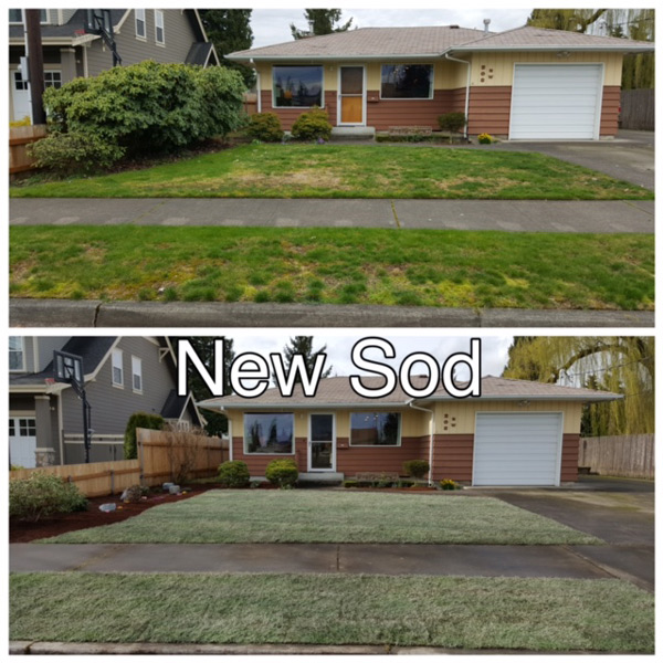 Minh's Landscaping - new lawn - new sod - reseeding - thatching - aerating - mowing - edging - Puyallup landscapers - South Hill landsacpers