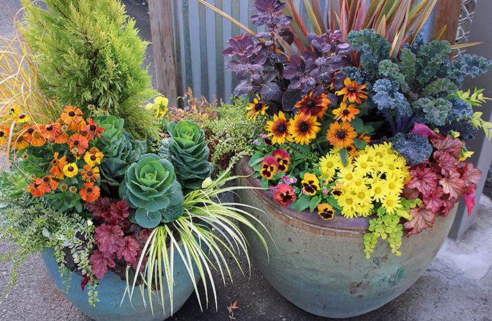 Molbak's Garden & Home has design experts to help you beautify your garden and home - gorgeous potted plants