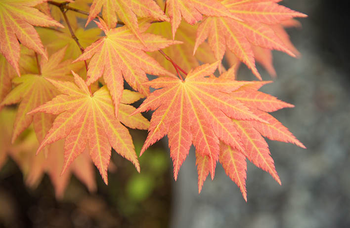 Fall plants and trees at Molbak's Garden & Home in Woodinville, Washington
