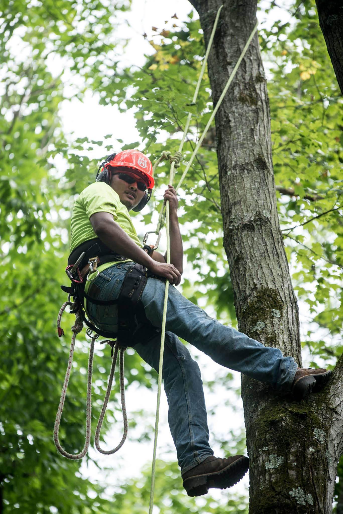 tree trimming; arborists