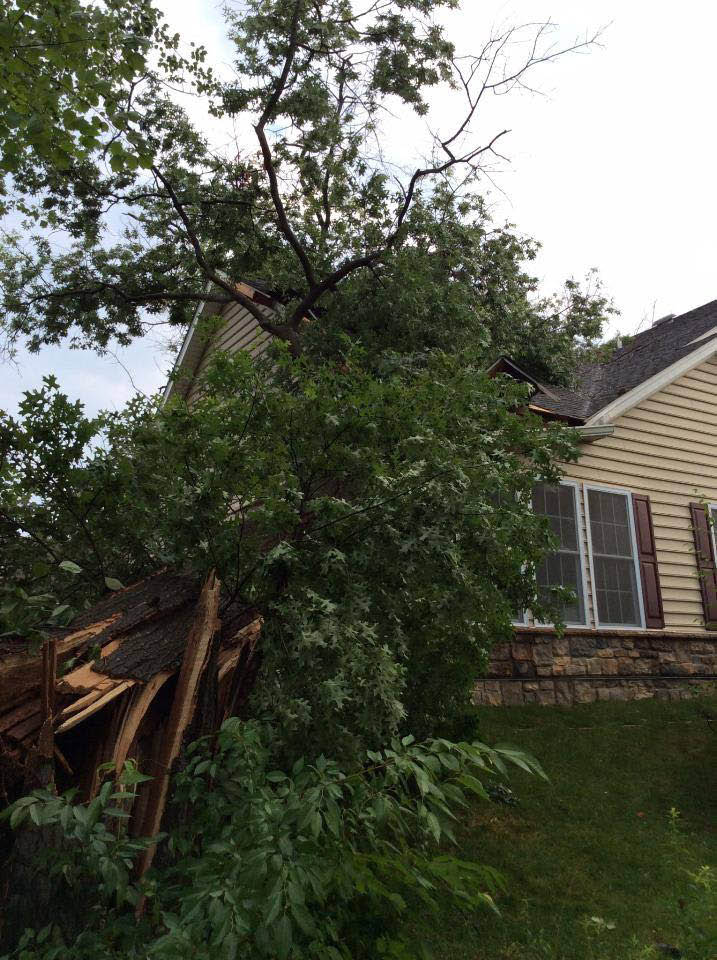 emergency tree services in San Jose, CA