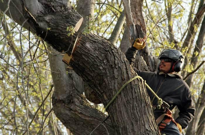 tree removal services in Santa Clara, CA