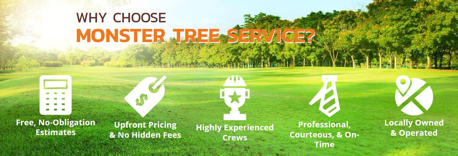 Monster Tree Service Banner