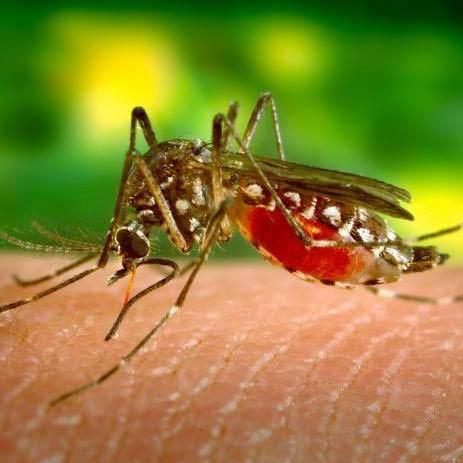 Mosquito removal service in suburban Minneapolis, MN