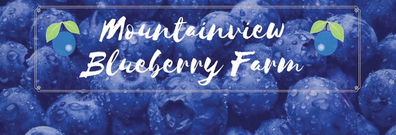 Mountainview Blueberry Farm main banner image - Snohomish, WA