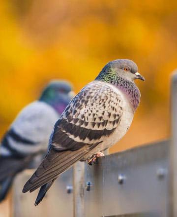 Bird removal and pest control in Novato