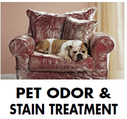 pet odor removal National Carpet Cleaning wesley chapel FL