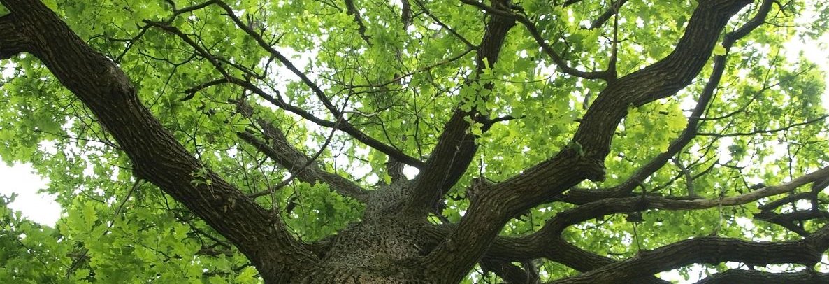 Tree banner picture
