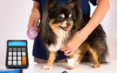 Mobile dog groomer in Los Angeles