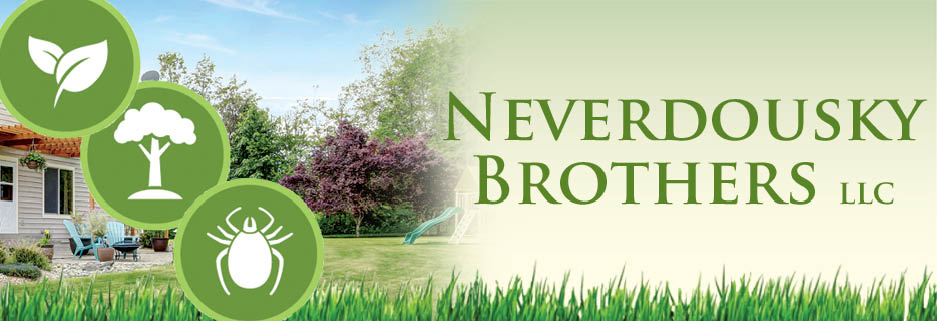 Neverdousky Brothers, Fairfield, CT banner image