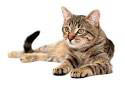 At New Market Animal Hospital we work with several low cost spay and neuter programs.