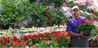 Nick's Garden Center in Aurora, CO flowers gardener annuals