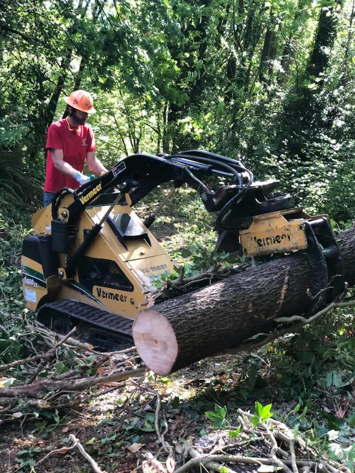 Arborist from Ron's Stump Removal & Tree Service removing trees with a Bobcat - tree removal services - Olympia, Washington tree removal companies - tree removal coupons