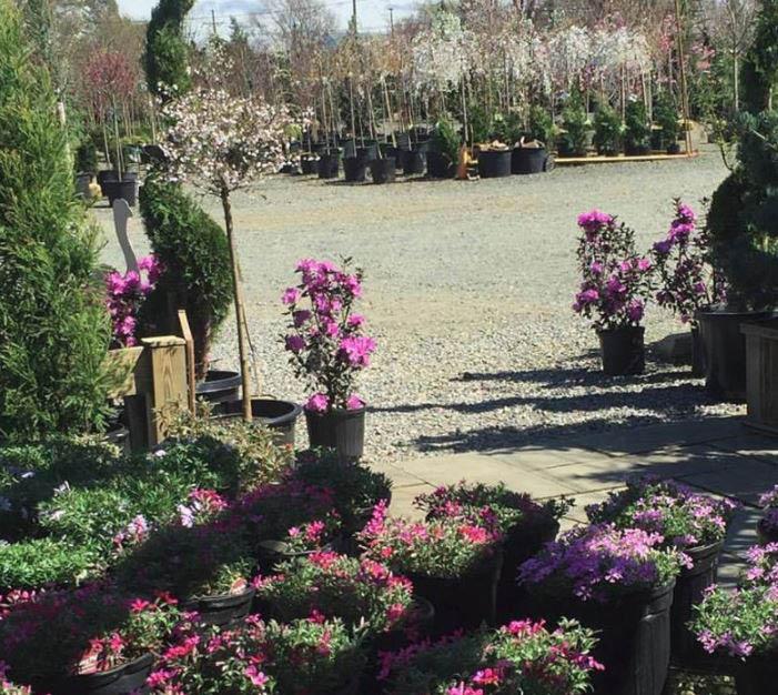plants, flowers, bushes
