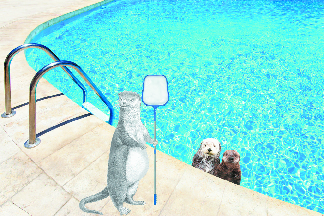 otter pool cleaning phoenix