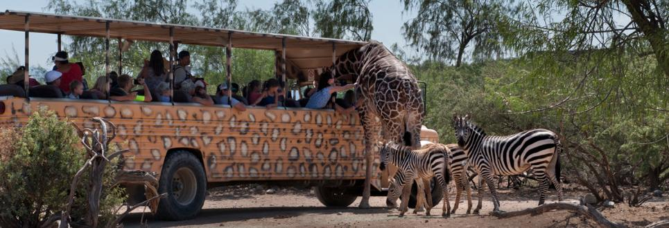 Out of africa 2019 coupons