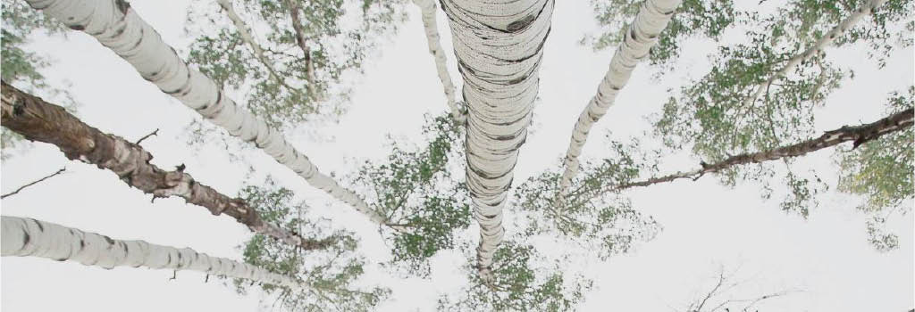 P.I.N.K. Chainsaw Tree Service main banner image - Mill Creek, WA