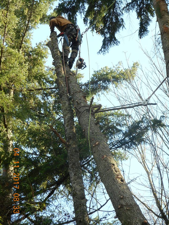 P.I.N.K. Chainsaw Tree Service - tree removal - tree pruning - tree trimming - expert tree care and tree removal - Snohomish County tree services