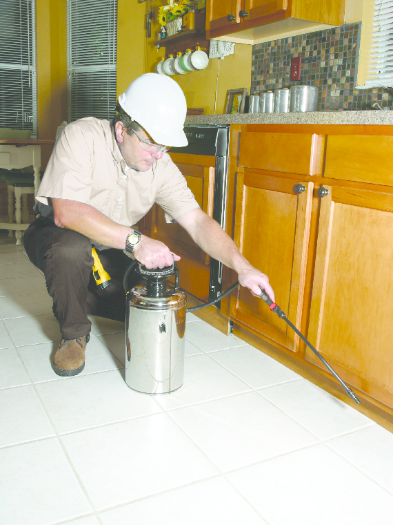 pest control; bug spraying; ants; roaches