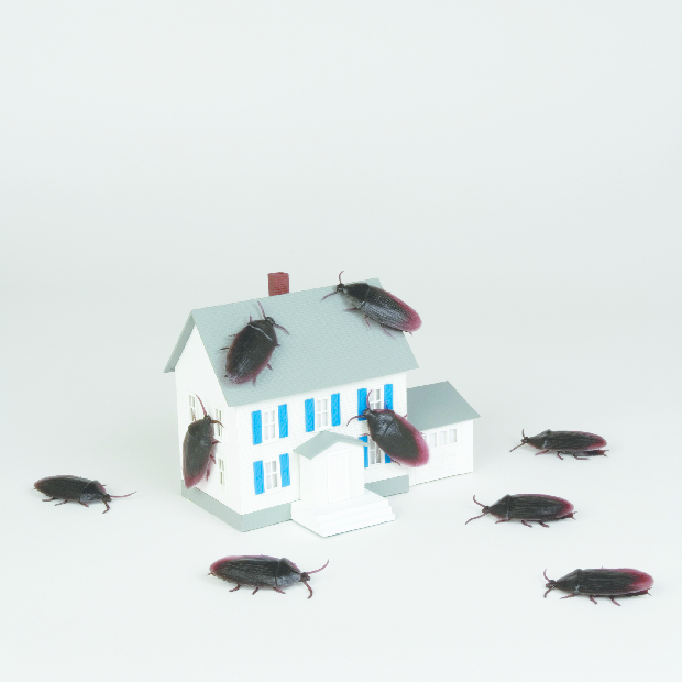 Infestation, pest control