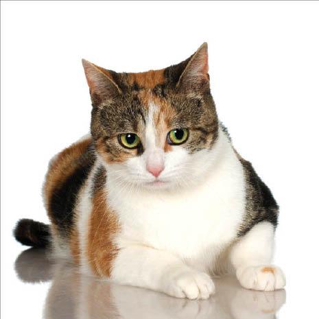 pet vet coupons near me cat doctor near me