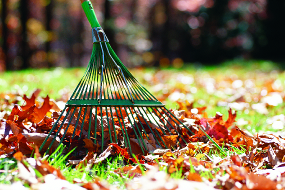 leaf raking and removal