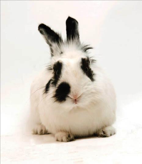 rabbit care cat care dog care vet for my rabbit pet bunny care pet rabbit vet near me