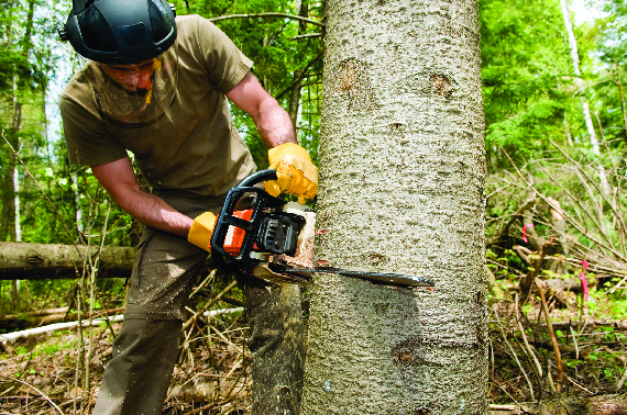 maryland tree care serving central maryland tree removal