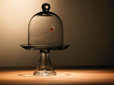home exterminator discount near me house fumigation discount near me termite control discount near me