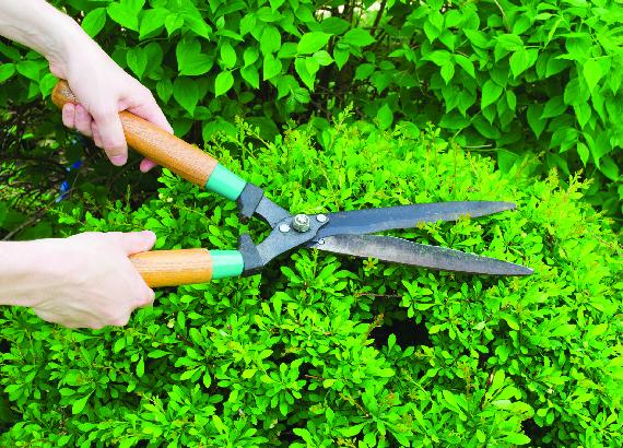Shrub trimming, tree care near Cypress, TX